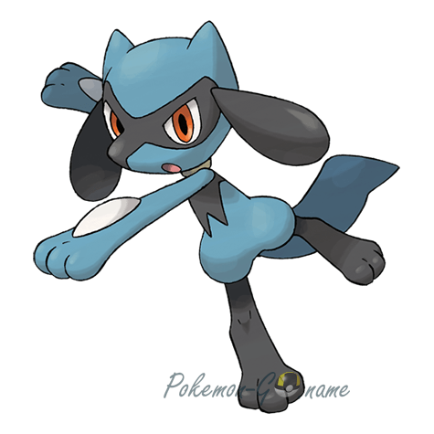 447 - Риолу (Riolu)